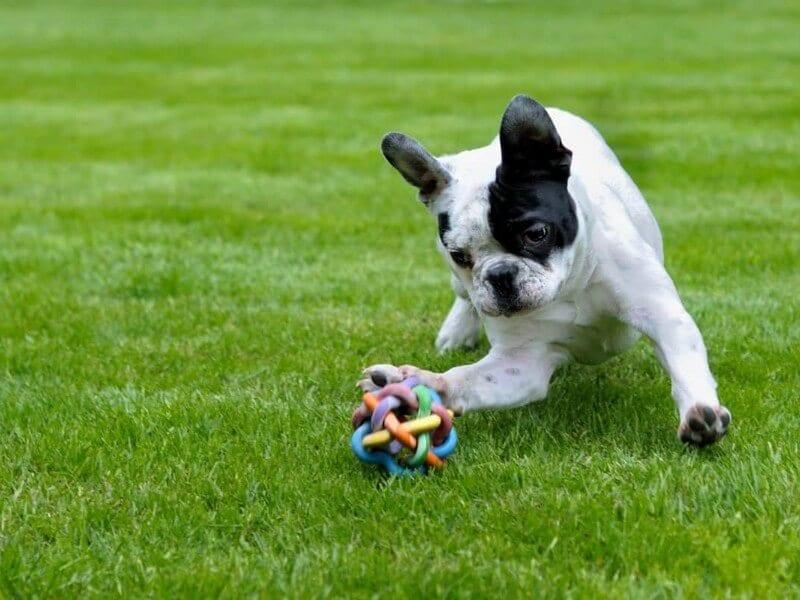 Hoe kun je een puppy zindelijk maken?
