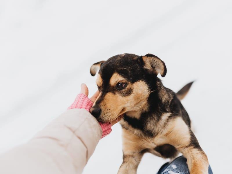 Hoe corrigeer je een puppy?
