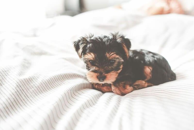 puppy alleen laten slapen