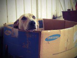 Hoe kun je een puppy leren wennen aan een nieuw huis?