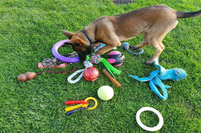 Beste speeltjes voor honden: Ontdek de 4 beste speeltjes voor je hond