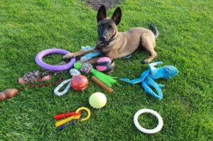 Wil jij het Beste Puppy Speelgoed voor je pup?