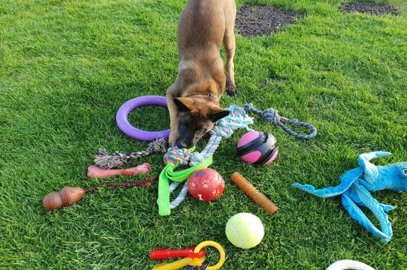 Beste puppy speelgoed top 3