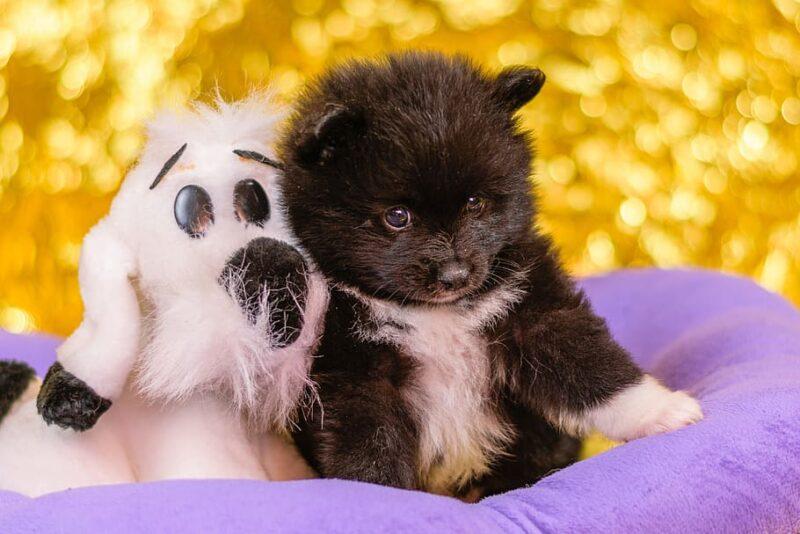 Tips bij het adopteren van een puppy