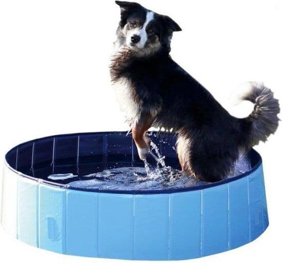 Top 3 beste hondenzwembaden