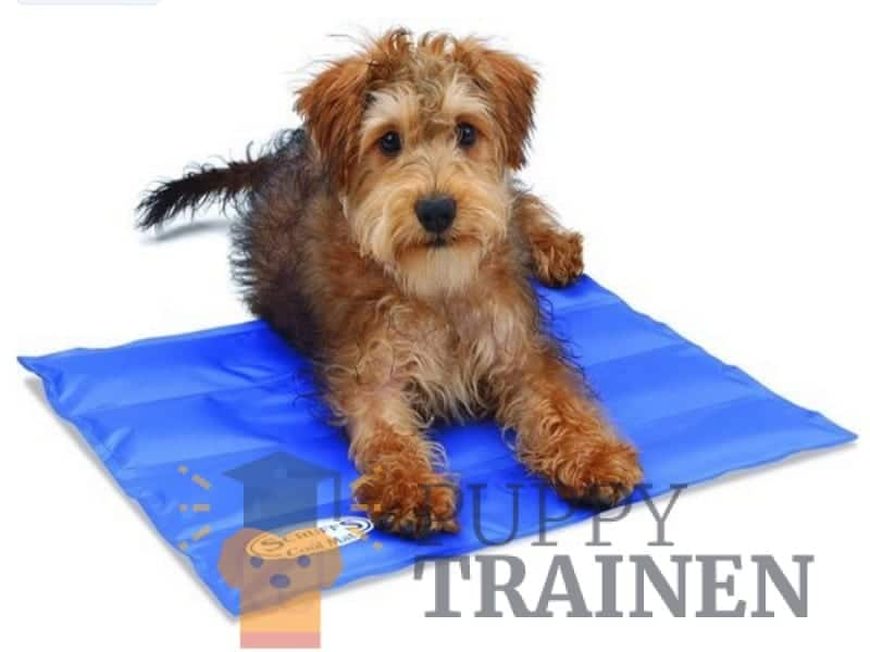 Scruffs Koelmat Hond – Blauw