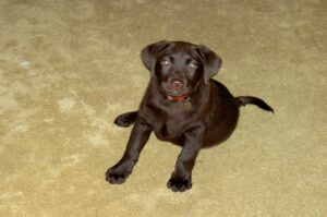 Beste puppy halsband – Top 5