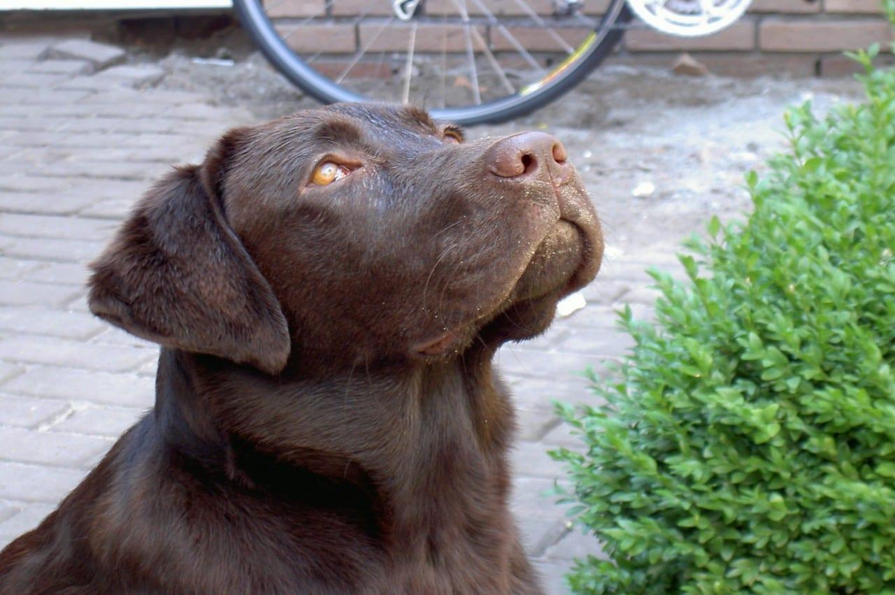 hals opmeten van puppy