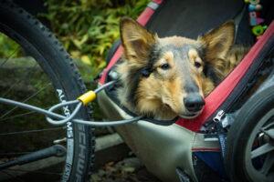 Beste hondenfietskar Top 5 – Hoogste kwaliteit