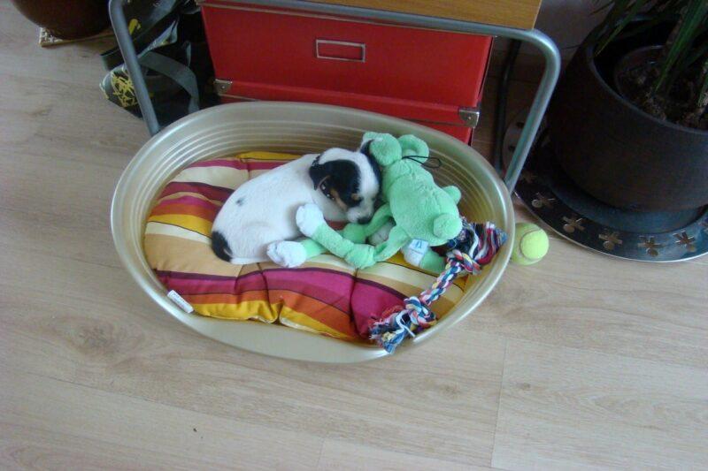 Huis puppy proof maken