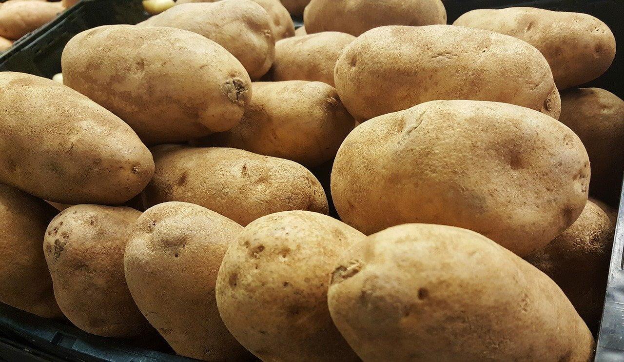 Aardappelen zijn zeer giftig voor honden