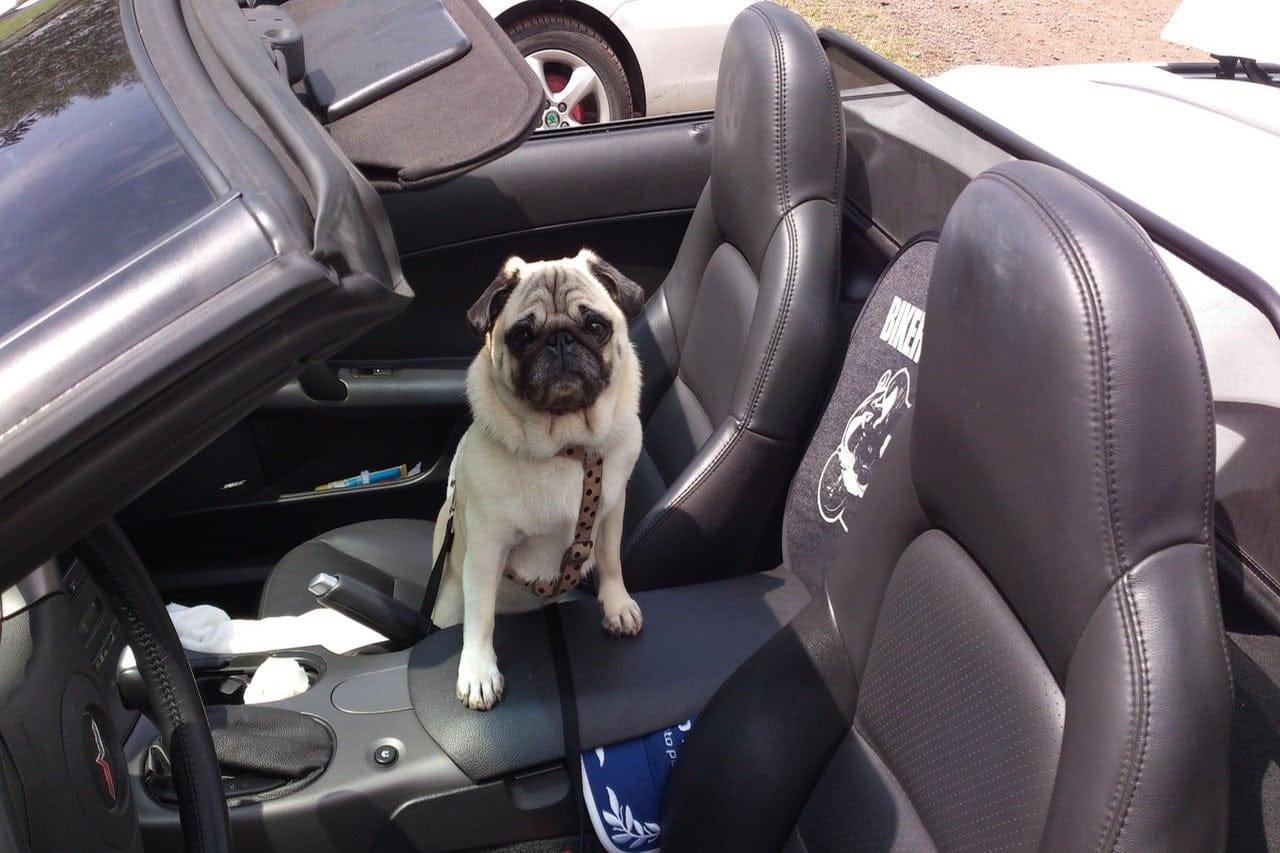 Beste autostoel voor hond