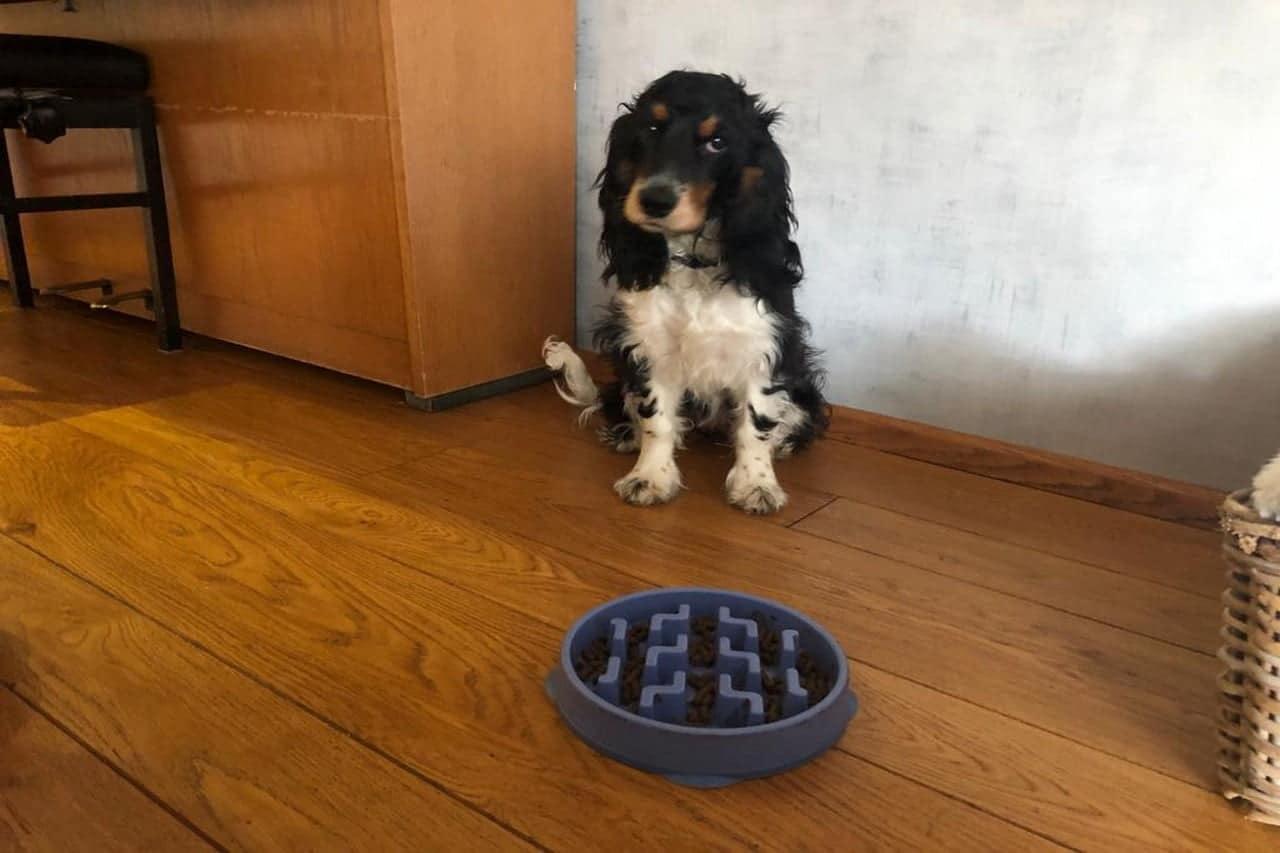 Beste hondenbrokken puppy – top 3