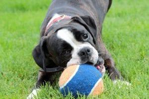 Bal voor puppy's – Beste top 4
