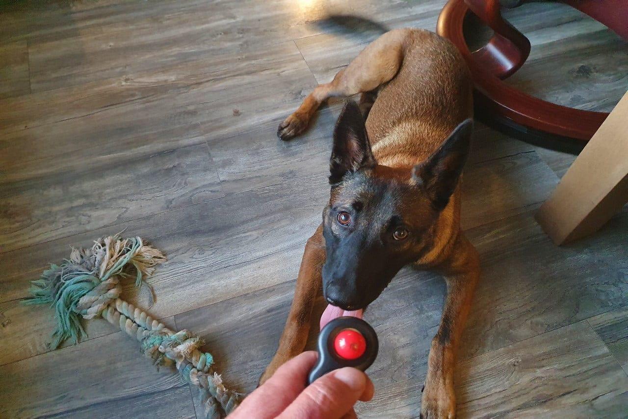 Beste Clicker voor honden – Top 5 Training Clickers