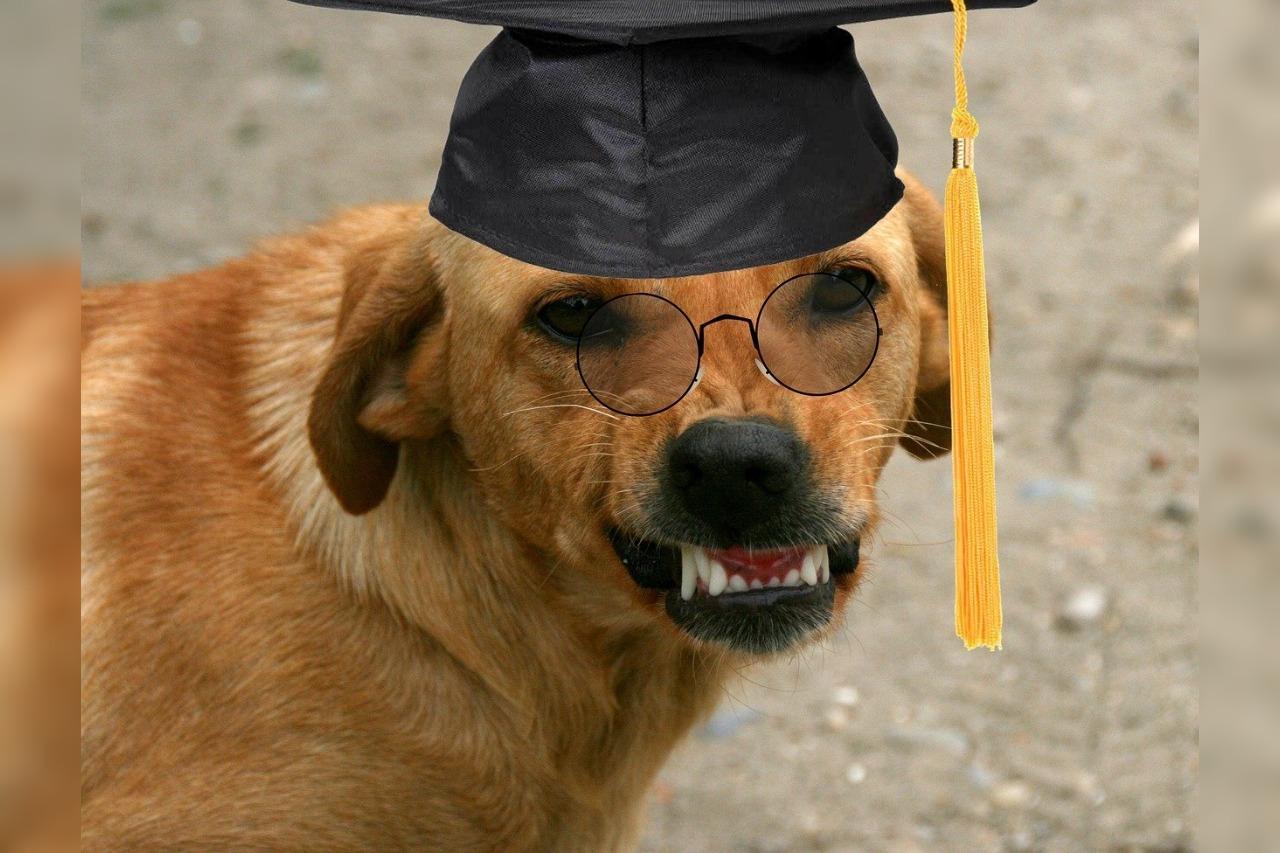 Beste hondenboeken voor puppy's – top 3