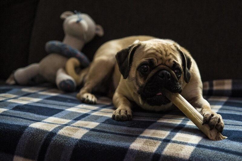 Beste hondenbot voor puppy's – Top 3