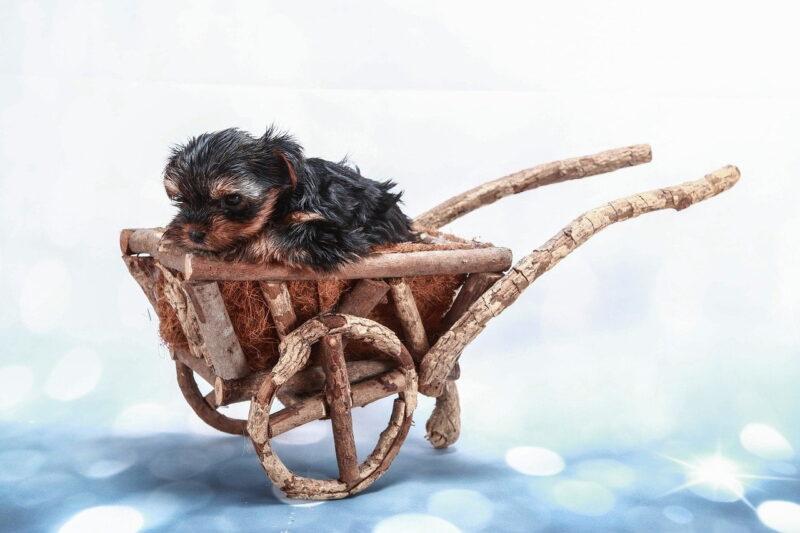 Beste hondenbuggy voor puppy's – Top 3
