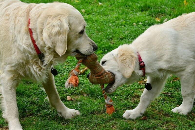 Flostouw voor puppy's – Beste top 4