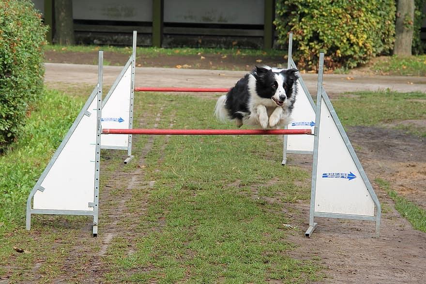 Beste Honden Cursus – Top 3 beste cursussen om je hond te trainen
