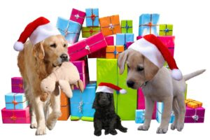 Beste cadeau voor honden – Top 3!