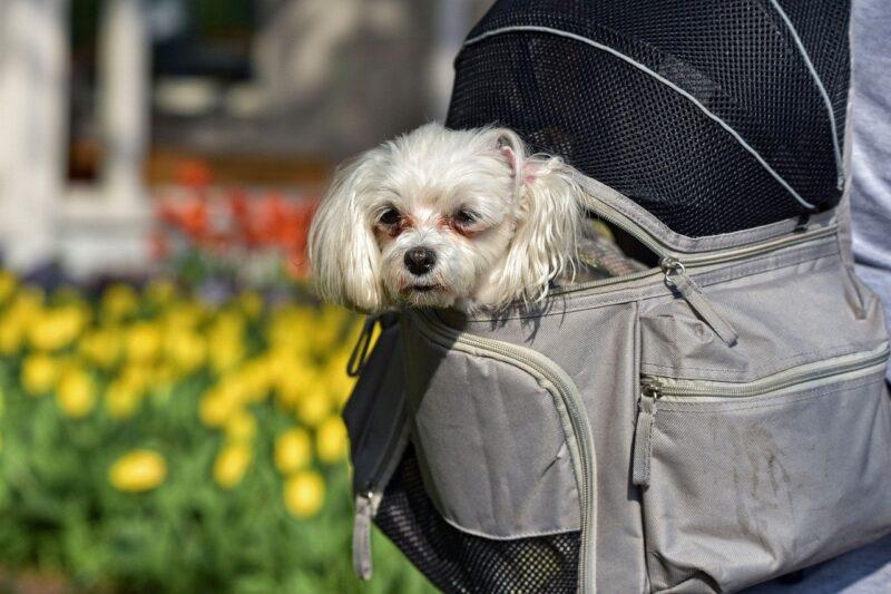 Beste Rugtas voor honden - Top 4 beste rugtassen voor je hond