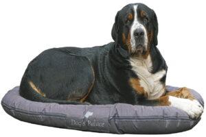 Lees meer over het artikel Beste hondenmand voor een grote hond – Top 3