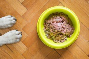 Beste puppy natvoer – Top 3