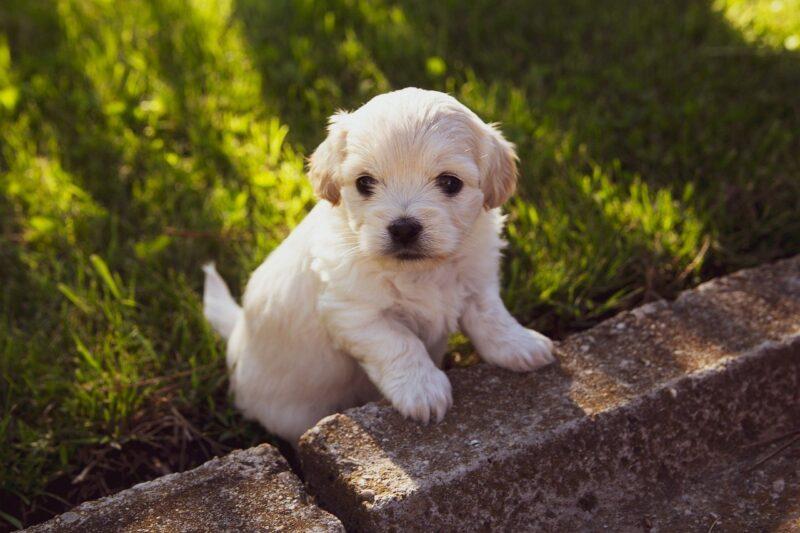Waar moet je op letten bij een puppy aanschaffen?