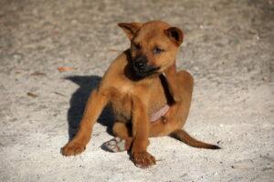 Beste vlooienmiddel hond – Top 3