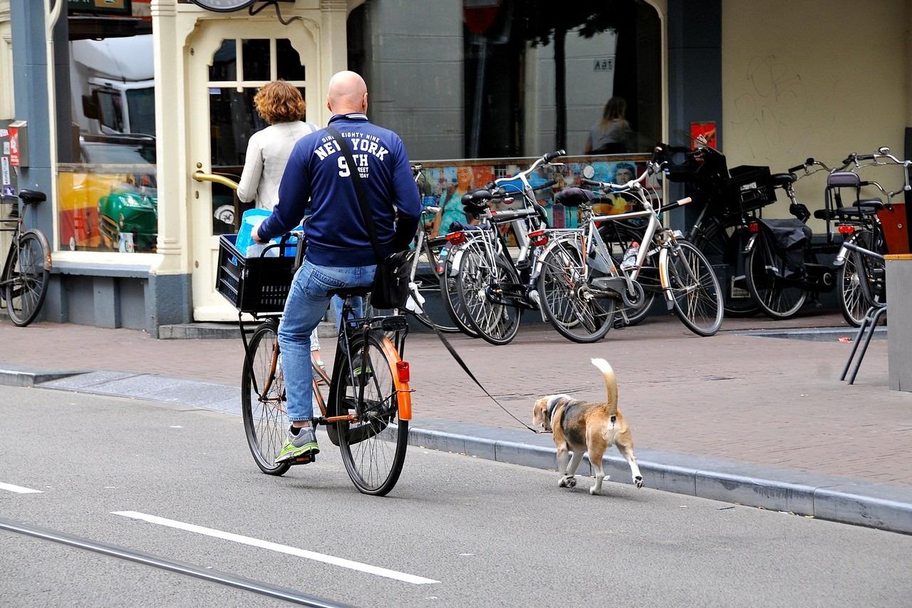 Beste fietsbeugel voor honden - TOP 5!