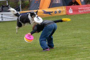Beste Frisbee voor honden – Onze Top 4!