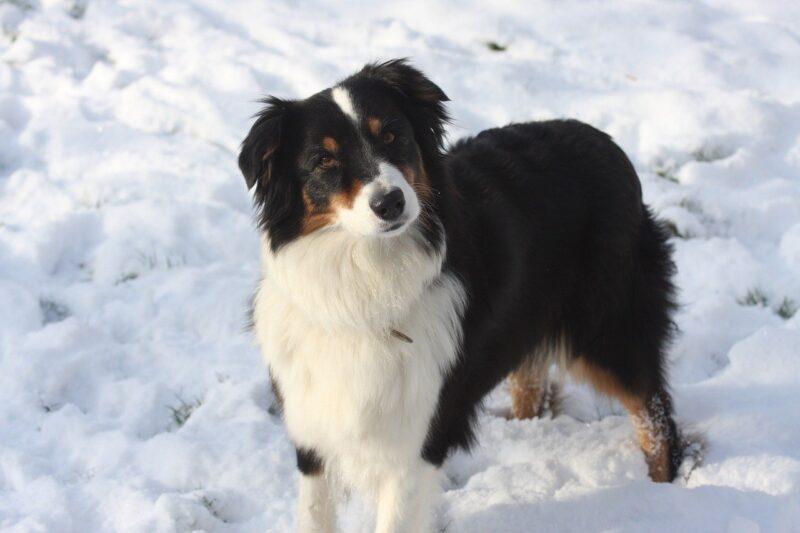 Beste Föhn voor honden Top 4 – Je Hond drogen was nog nooit zo makkelijk