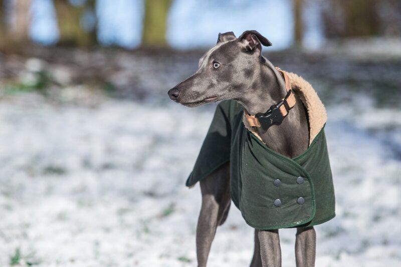 Beste Jas voor honden Top 5 - Zo blijft je hond warm en droog!