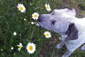 Beste Parfum voor honden – Dit zijn de  4 lekkerste honden parfums!