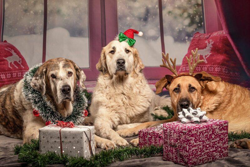 Beste cadeau voor honden - Top 3!