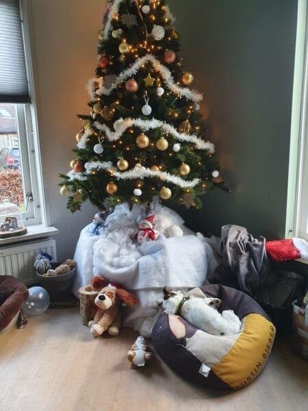 Feestdagen: Ontdek de leukste cadeaus om aan je hond te geven!