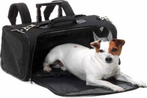 Beste Rugtas voor honden – Top 4 beste rugtassen voor je hond