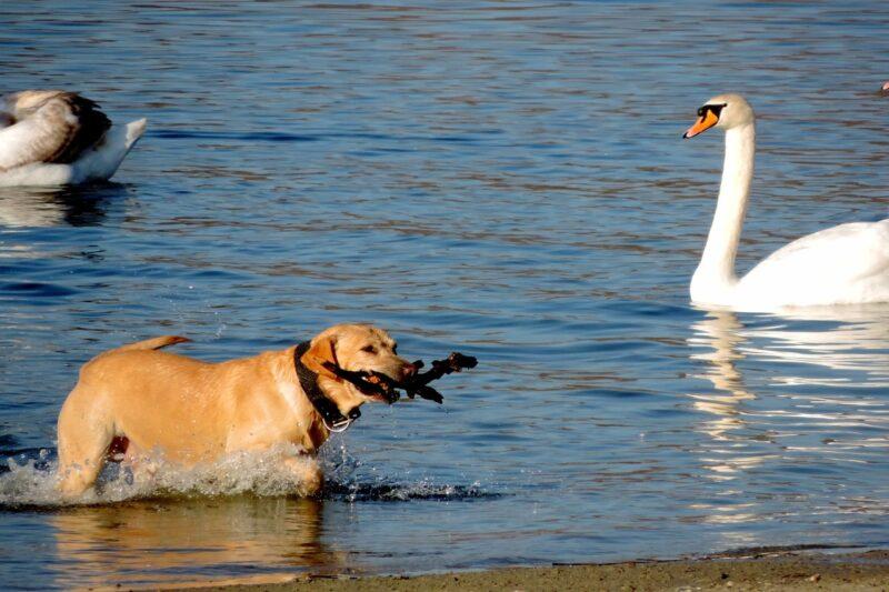 Beste zwemvest voor honden: Dit zijn de 4 beste zwemvesten voor honden!