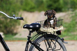 Lees meer over het artikel Je hond veilig mee op de fiets? Gebruik hulpmiddelen!