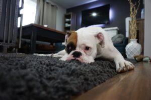 Hond laten afvallen? Praktische tips!