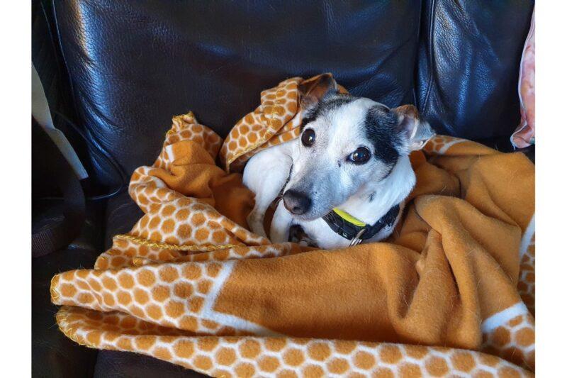 Hoe kun je leren je hond alleen thuis te laten blijven? - Praktische tips