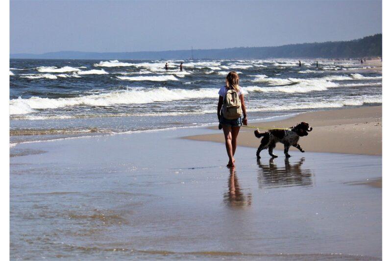 Waar mag je wandelen met je hond? - Top 3 plekken in Nederland!