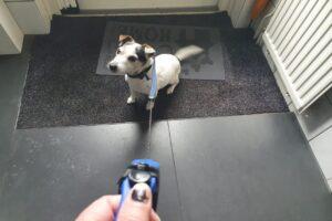 Een hondenriem aanschaffen? Dit is waar je op moet letten!