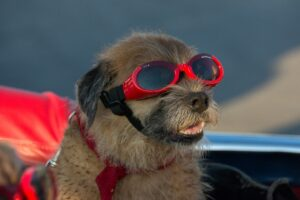 Je hond meenemen op vakantie? Dit is waar je op moet letten!