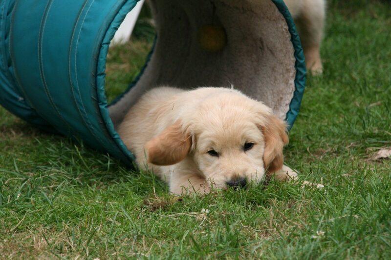Is een puppycursus echt nodig?