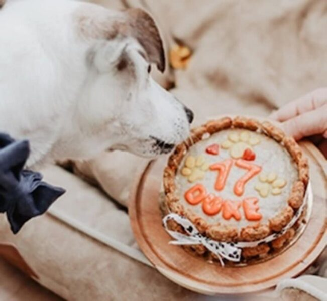 De heerlijkste hondentaarten en cupcakes van Doggi