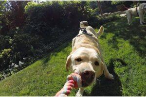Lees meer over het artikel Beste GoPro Hondenharnas – Onze top 3!