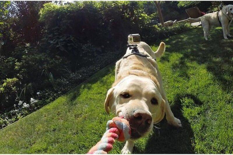 Beste GoPro Hondenharnas - Onze top 3!