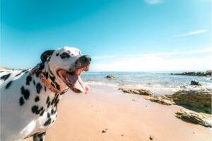 Beste hondenvakanties in nederland – Top 9 vakantieparken!